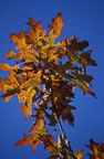 Click for Autumn Gallery